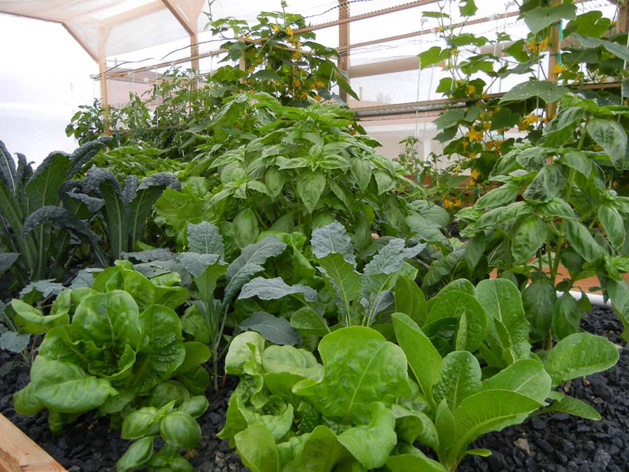 Weed Plants In Backyard : Sustainability is an important key to the future of the world Join us