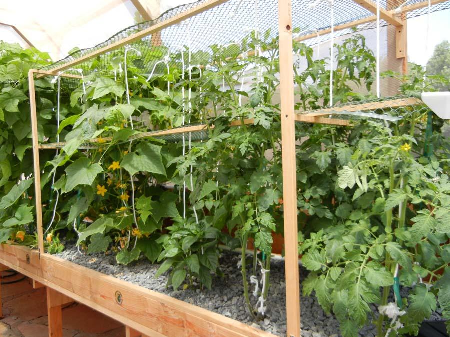 FAQ - Portable Farms  X Vegetable Garden Designs Html on