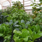 portable-farms-green interior-3