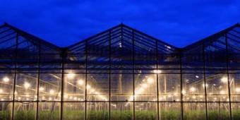 greenhouselightsatnight